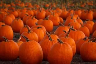 Pumpkin Fundraiser New Life